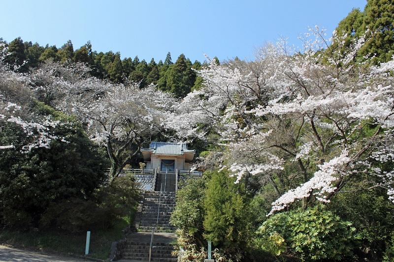 桜_三岳神社