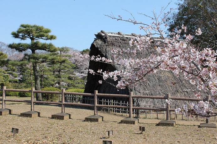 桜_蜆塚遺跡