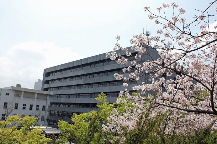 桜_浜松市役所